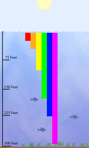 What Color Fishing Lure Diagram